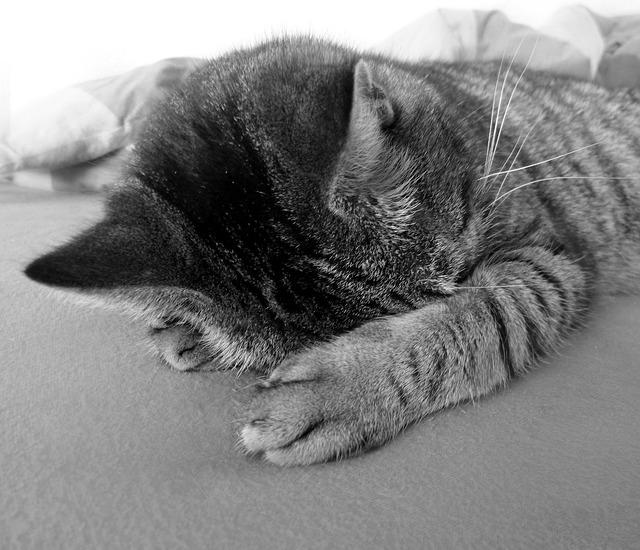 gatto-depresso